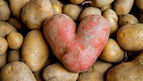Kartoffeln Lagern Tontopf kartoffeln lagern so bleiben sie am l 228 ngsten frisch