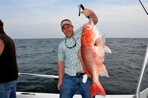 Charter Boat Fishing In Gulf Shores Alabama by Gulf Shores Alabama Summer Vacation Charter Fishing Season