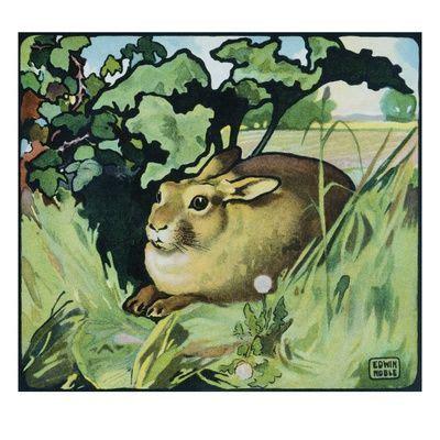 illustration   resting rabbit  edwin noble rabbits