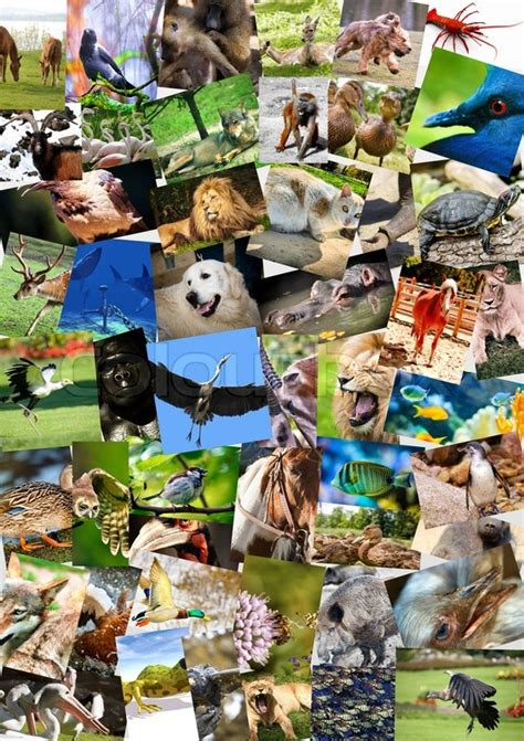 animals collage  postcards stock photo