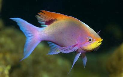 Fish Cool Backgrounds Tropical Colorful Underwater Sea