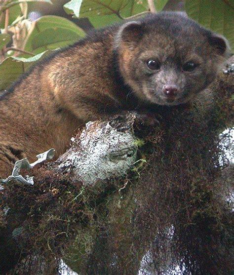 15 Cutest Weird Animals Around OLINGUITO