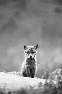 Fox Baby. | ~~ cute animals ~~ | Pinterest