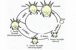 Mites Alimentaires Cycle De Reproduction : how to control spider mites organically ~ Dailycaller-alerts.com Idées de Décoration