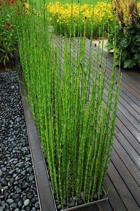 mur de bambou exterieur les 25 meilleures id 233 es de la cat 233 gorie bambou sur id 233 es bambou design de bambou et