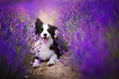 niesamowite zdjecia psow polskiej fotografki maximus