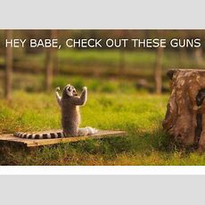 Hey Babe Check Out These Guns  Guns Meme On Sizzle