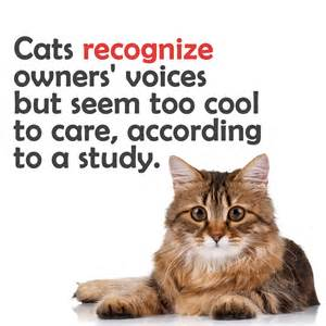 information about cats cat facts 33 things about cats you didn t