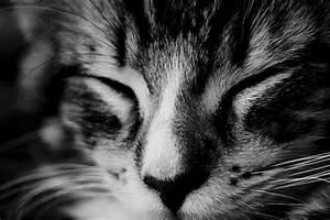 Süße Träume Bilder Kostenlos : s e tr ume sami foto bild tiere haustiere katzen bilder auf fotocommunity ~ Bigdaddyawards.com Haus und Dekorationen
