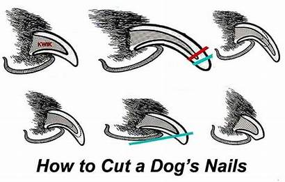 Nails Dog Dogs Cut Trim Claws Often