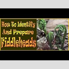 Fiddleheads How To Identify And Prepare This Wild Delicacy Youtube