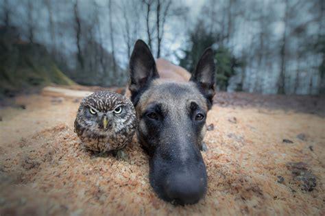 ingo  dog  poldi  owl  unusual friends