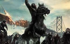 Caesar in Dawn of the Planet of the Apes wallpaper - Movie ...