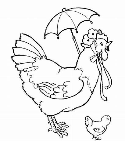 Coloring Chicken Pages Hen