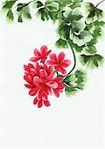 Geranium Stock Illustrations - GoGraph