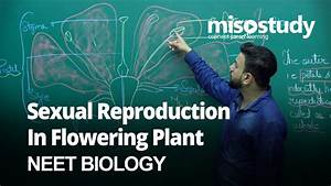 Whorls Of Flower Biology 12th For Neet 2020 In English