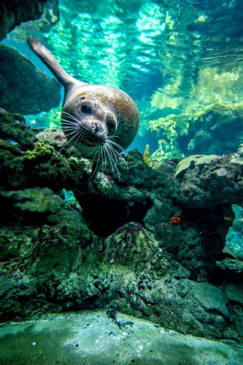 seal underwater luvbat