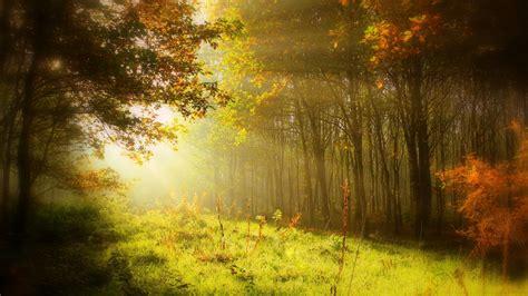 wallpaper autumn forest sun light hd nature