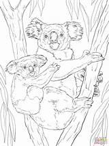 Koala Coloring Pages Bear Printable Animals Koalas Drawing Crafts Animal Adult Realistic Colouring Supercoloring Sheets Para Bears Colorir Desenhos Dot sketch template