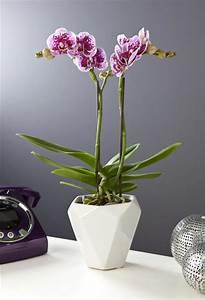 Cache Pot Orchidée : orchid e papillon avec cache pot villaverde ~ Teatrodelosmanantiales.com Idées de Décoration
