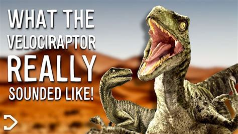 What Did The Velociraptor Really Sound Like Youtube