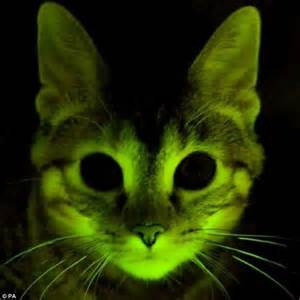 glow in the cats could help find a cure for hiv