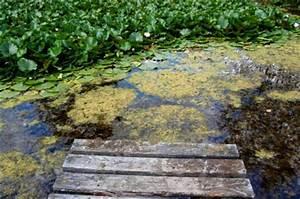 Algen Im Gartenteich : algen im schwimmteich bek mpfen 6 tipps ~ Michelbontemps.com Haus und Dekorationen