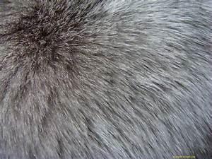 , skin, texture fur, wolf fur texture background, background