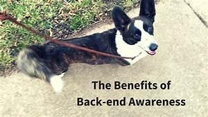 Precision dog training exercises for increasing accuracy for Precision dog training