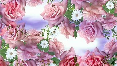 Flowers Roses Graphics Flower Wallpapers Markoniczek Published