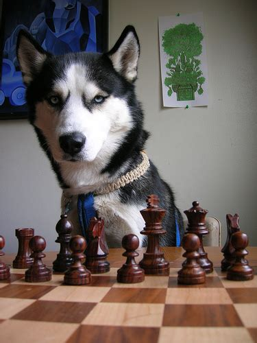 Greek Chess P Os Can Your Dog Play Chess