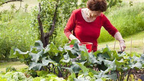Hochbeet Im Garten by Hochbeete Im Garten Zdfmediathek