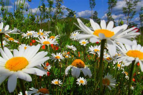 sommerwiese foto bild jahreszeiten sommer