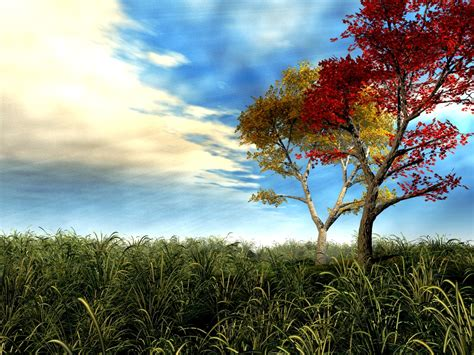 3d Wallpapers Trees 3d tree wallpaper free 3d wallpaper