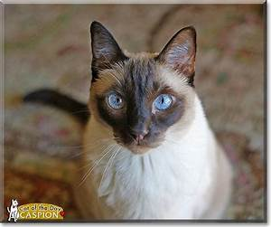 93 best images about Siamese Cats on Pinterest | Canada ...