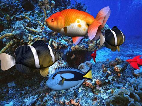 3d Animal Wallpaper 3d Fish Wallpaper - 3d screensaver sound with screen saver cool nature