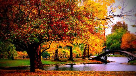 Fall Desktop Wallpaper ·① Download Free Awesome High