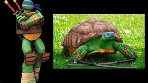 TMNT 2012 in real life character comparisons - YouTube