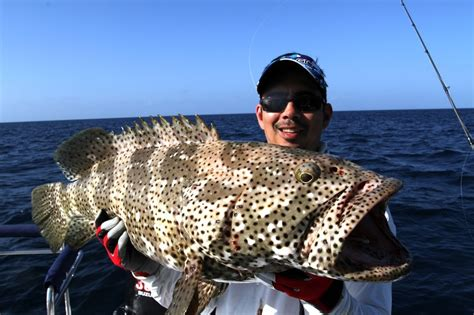grouper cod australia fish catch fishing groupers similar lure caught flowery estuary malabar distinguished spots author tropical howtocatchanyfish