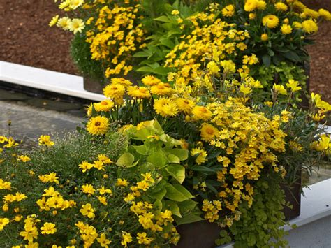 balkon pflanzen töpfe wie gestalte ich meine terrasse rustikale terrassengestaltung mediterraner hausbau wie