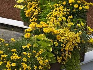 Blumenkästen Bepflanzen Sonnig : blumen und ideen f r ihre blumenk sten in gelb ~ Frokenaadalensverden.com Haus und Dekorationen