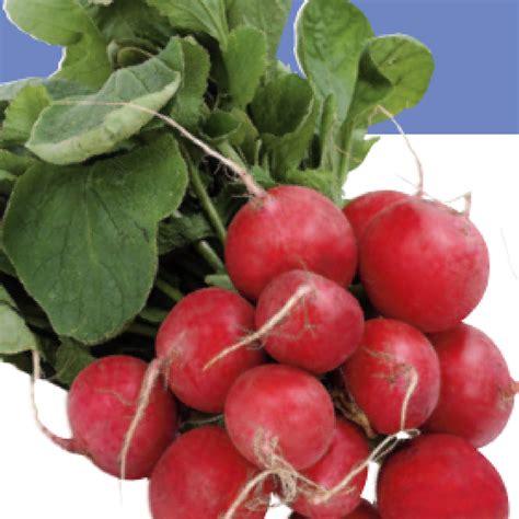 growing radishes   grow radishes  texas
