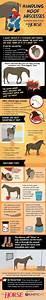 Equine Limb Anatomy