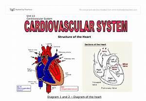 Cardiovascular Essay System