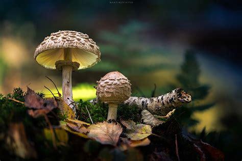 Glowing Mushrooms Look Like From Fairytale Lands