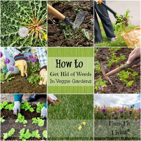 prevent weeds in garden how to get rid of weeds in vegetable gardens
