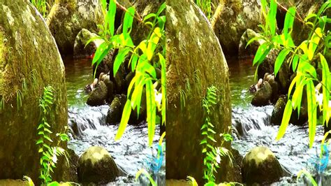 Hawaii's Nature In 3d (yt3d) 3d Nature