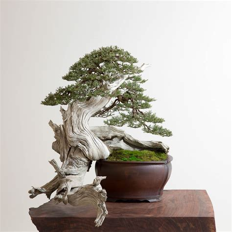 home design for beginners the of japanese bonsai trees craftsmanship magazine
