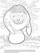 Manatee Coloring Algae Pages Manatees Sheets Printable Dover Crafts Publications Doverpublications Template Craft Dugong Adult West Welcome Books Drawings Animal sketch template