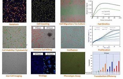 Esight Imaging Xcelligence Rtca Cell System Ols